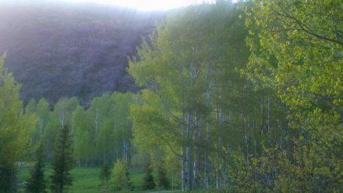 Spring green 2013